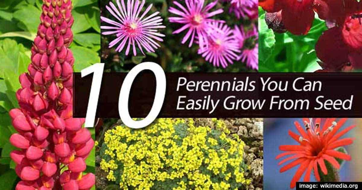10 Perennials You Can Easily Grow From Seed