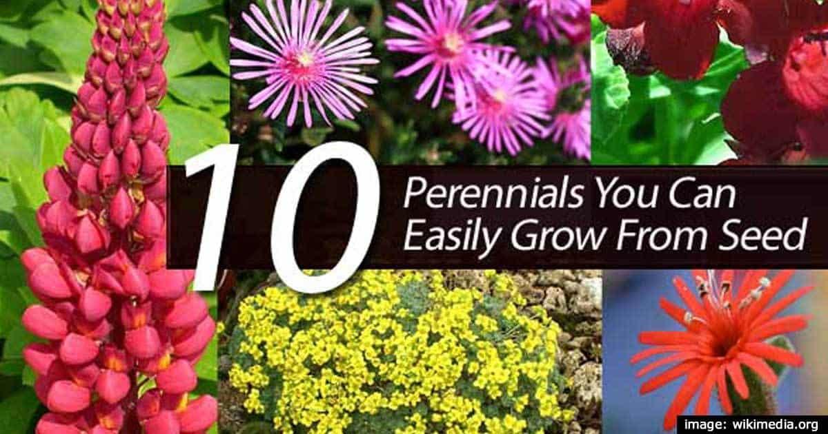 10-perennials-seed-01312016
