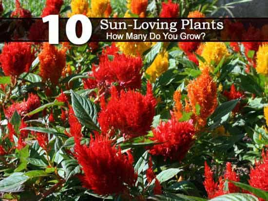 10 sun loving plants how many do you grow Plants that love sun and heat
