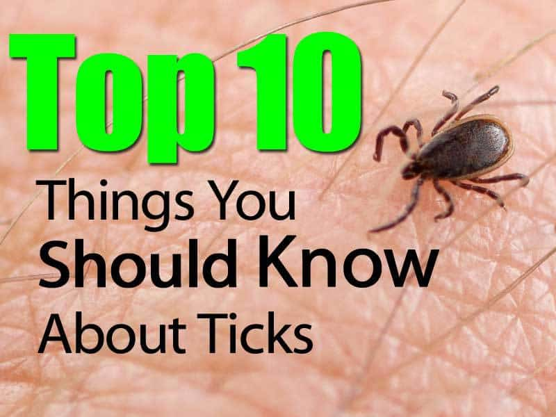 10 Things I Know About You: Top 10 Things You Should Know About Ticks