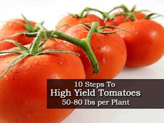10-tomato-010714