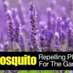 11 Mosquito Repelling Plants For The Garden
