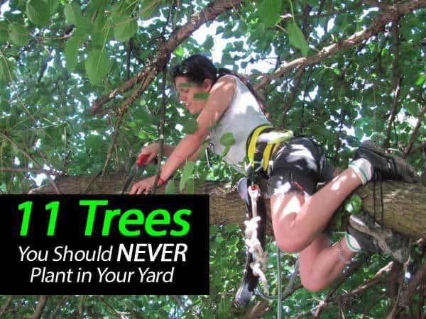 11-trrees-never-plant-031514