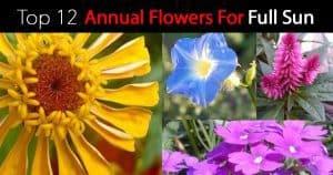 flowers for full sun