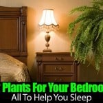 12 Plants For Your Bedroom All To Help You Sleep