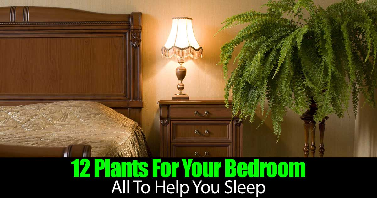 12-bedroom-plants-93020152285
