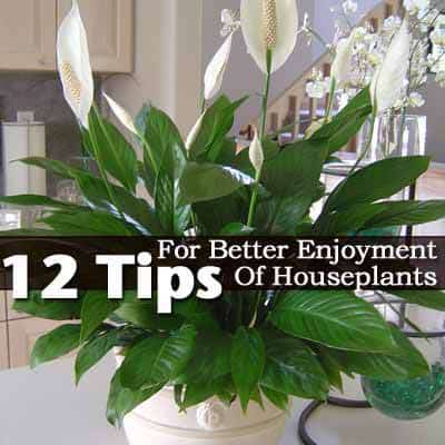 12 Tips For Better Enjoyment Of Houseplants - Decorative Large House Plant Containers Html on large plant pots for trees, large potted plants, natural spring decorative plant containers, large outdoor glazed pots,
