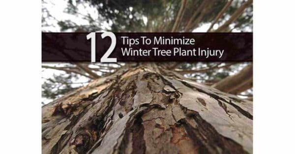 12-winter-injury-09302016