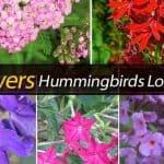 15 Flowers Hummingbirds Love To Visit