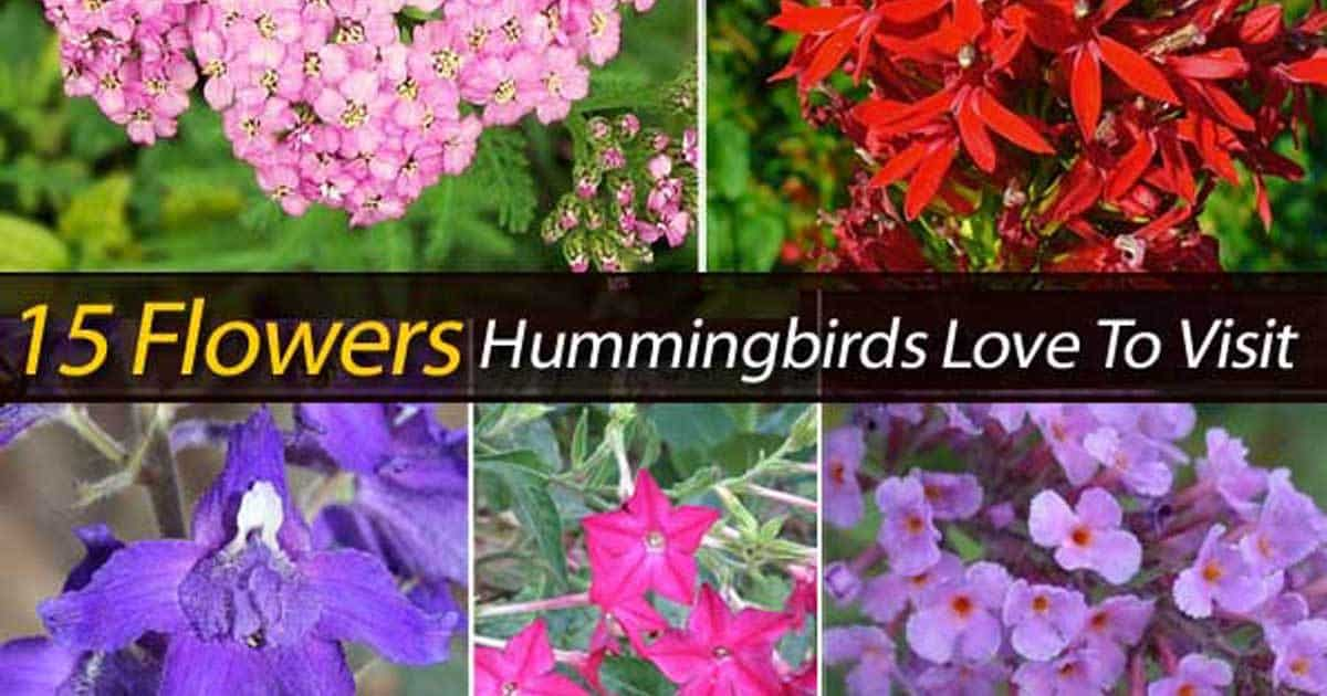 15 hummingbird flowers to attract the birds!