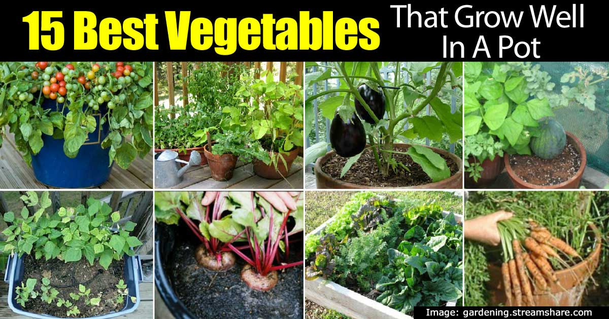 15 TOP Vegetables That Grow Well In A Container Or Pot