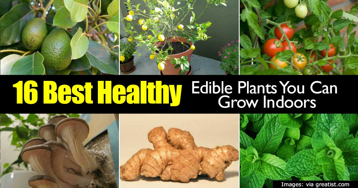 16 Best Healthy Edible Plants To Grow Indoors -