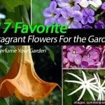 21 Favorite Fragrant Flowers For the Garden