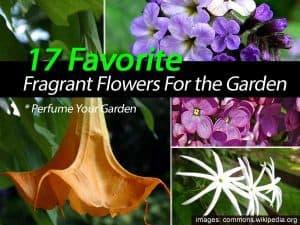 Fragrant garden flowers