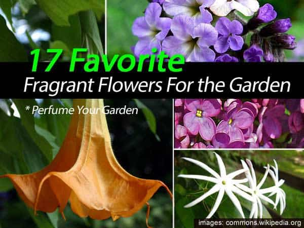 17-fragrant-flowers-022814