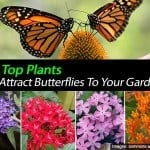 17 Top Blooming Plants For Your Butterfly Garden