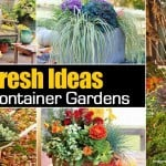Fresh Ideas For Fall Container Gardens