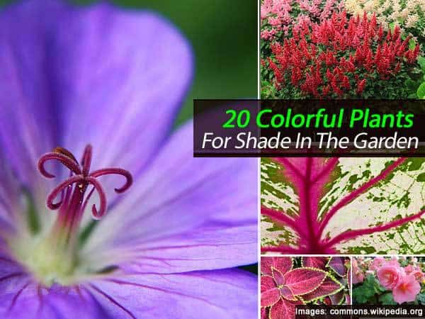 20 Colorful Plants For Shade In
