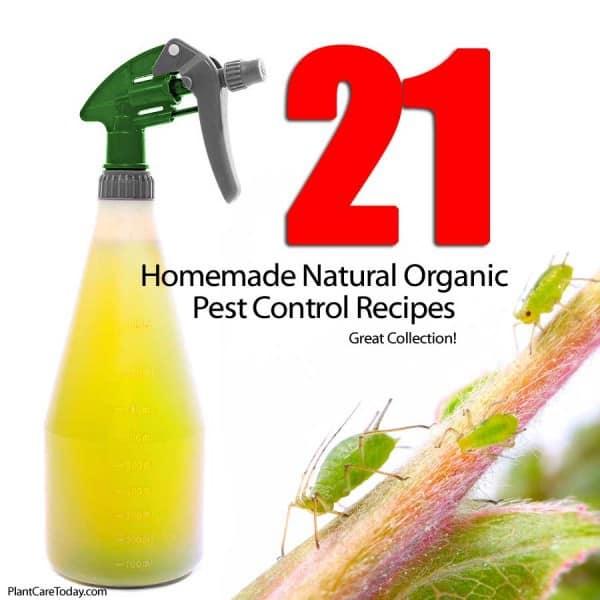 21 Homemade Natural Organic Pest Control Recipes