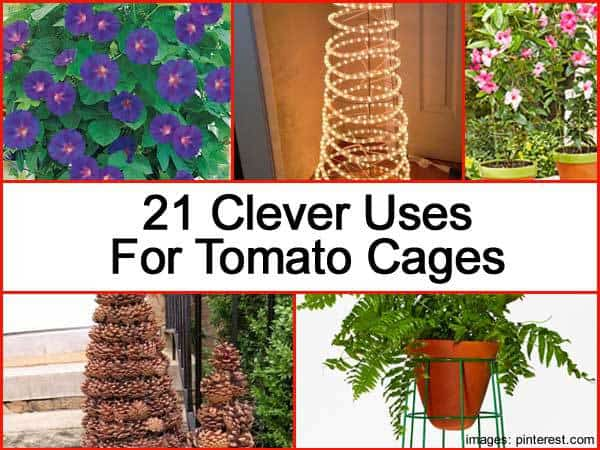 21-uses-tomato-cages-043014