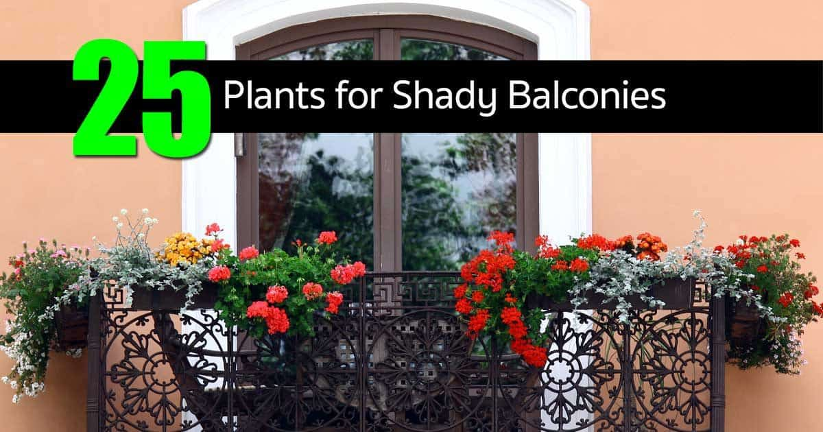 Shade Plants Outdoor Container