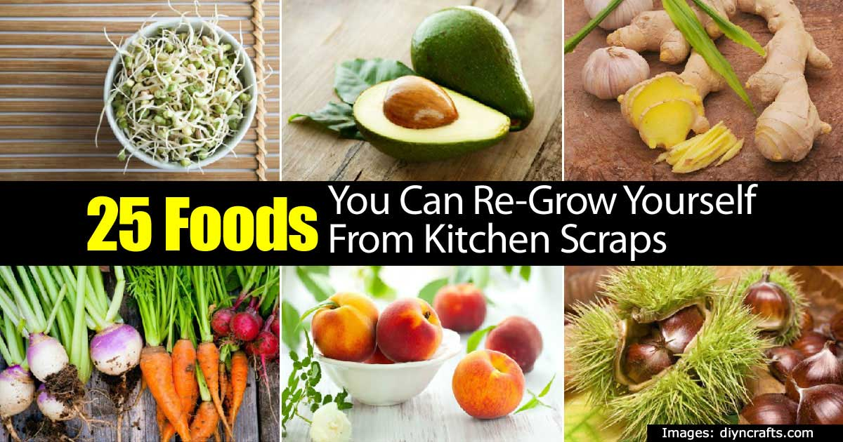 25 Foods You Can Re-Grow Yourself From Kitchen Scraps Growing Vegetables From Scraps