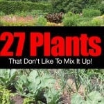 27 Plants That Don't Like To Mix It Up – Incompatible Plants!