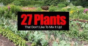 Incompatible plants - some plants grow well together and some plants do not plant together