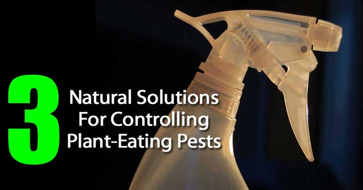 natural pest control for the garden