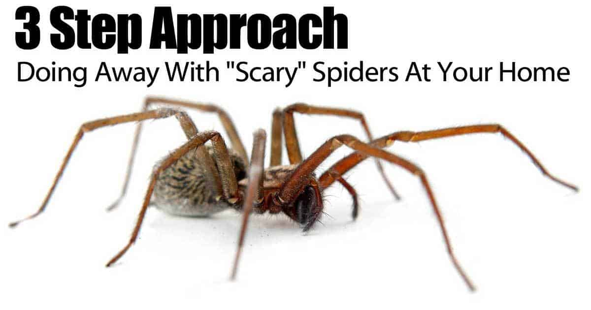 3 Step Approach To Doing Away With Quot Scary Quot Spiders At Your