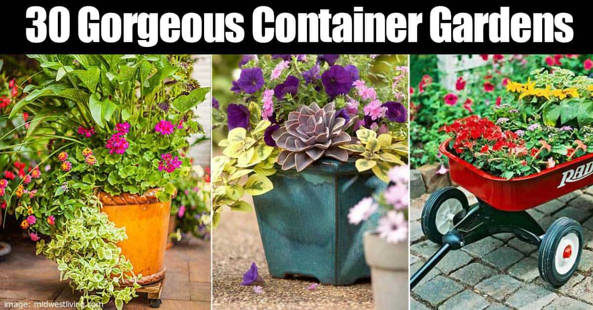 30 Gorgeous Container Gardens To Add Zing To Any Deck Patio or Yard