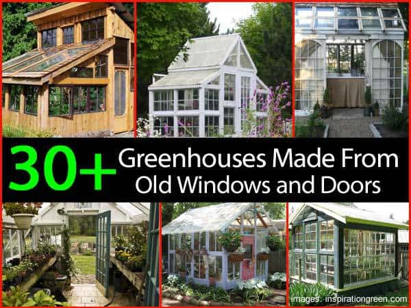 Collection Of Greenhouse Made Old Windows