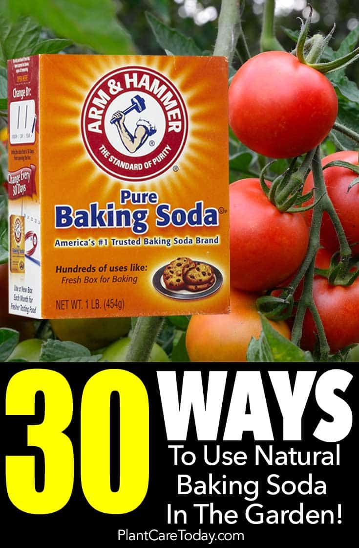 30 ways to use natural baking soda in the garden