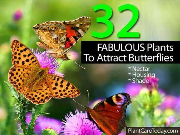 32-butterfly-043014