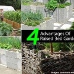 4 Advantages Of Raised Bed Gardens