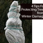 4 Tips For Protecting Trees from Winter Damage