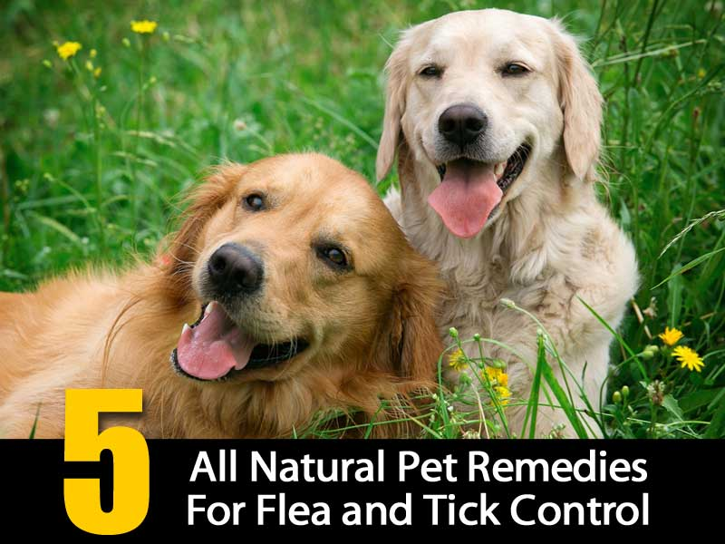 All Natural Tick Bath For Dogs