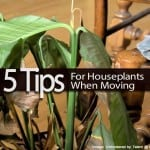5 Tips For Houseplants When Moving