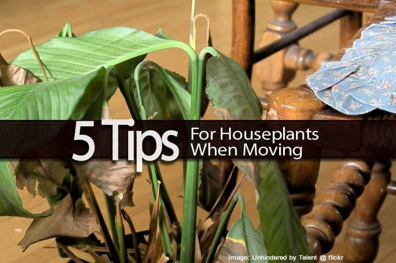 5-moving-houseplants-110413