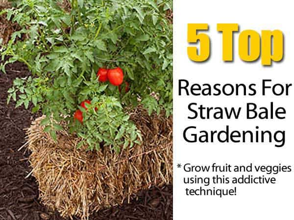 5 Top Reasons For Straw Bale Gardening