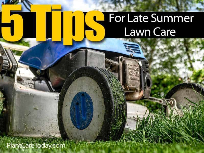 5 tips for late summer lawn care 7 late summer lawn care tips infographic grand river