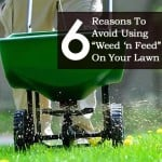 "6 Reasons To Avoid Using ""Weed 'n Feed"" On Your Lawn?"