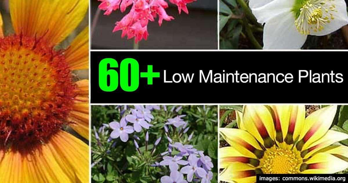 60 low maintenance plants for Low care garden plants