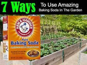 7-baking-soda-uses-garden-sb-07312015