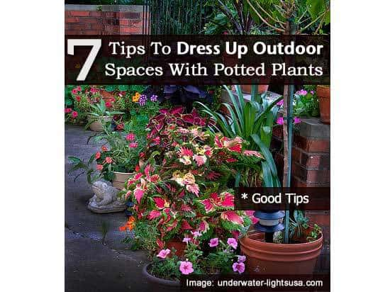 7 tips to dress up outdoor spaces with potted plants for Best easy care outdoor plants
