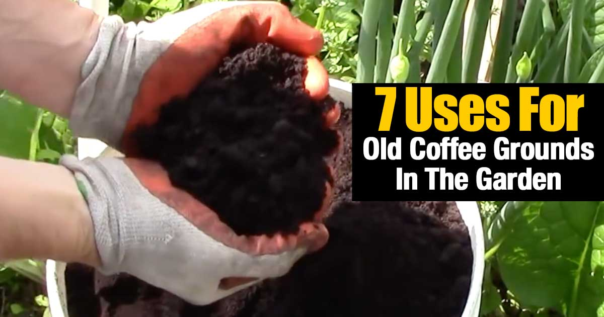 7 uses for old coffee grounds in the garden for How to use coffee grounds in garden