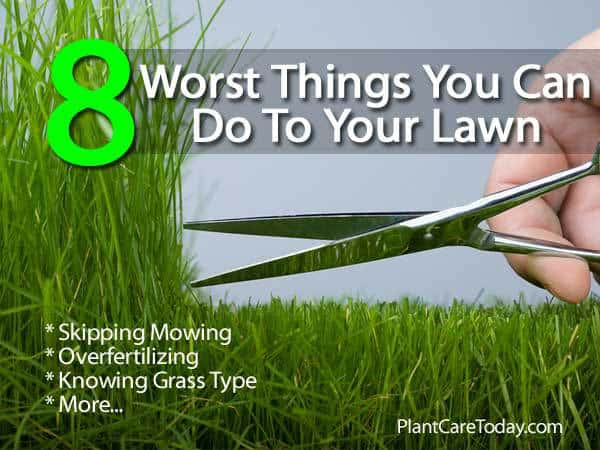 8-worst-things-lawns-053114