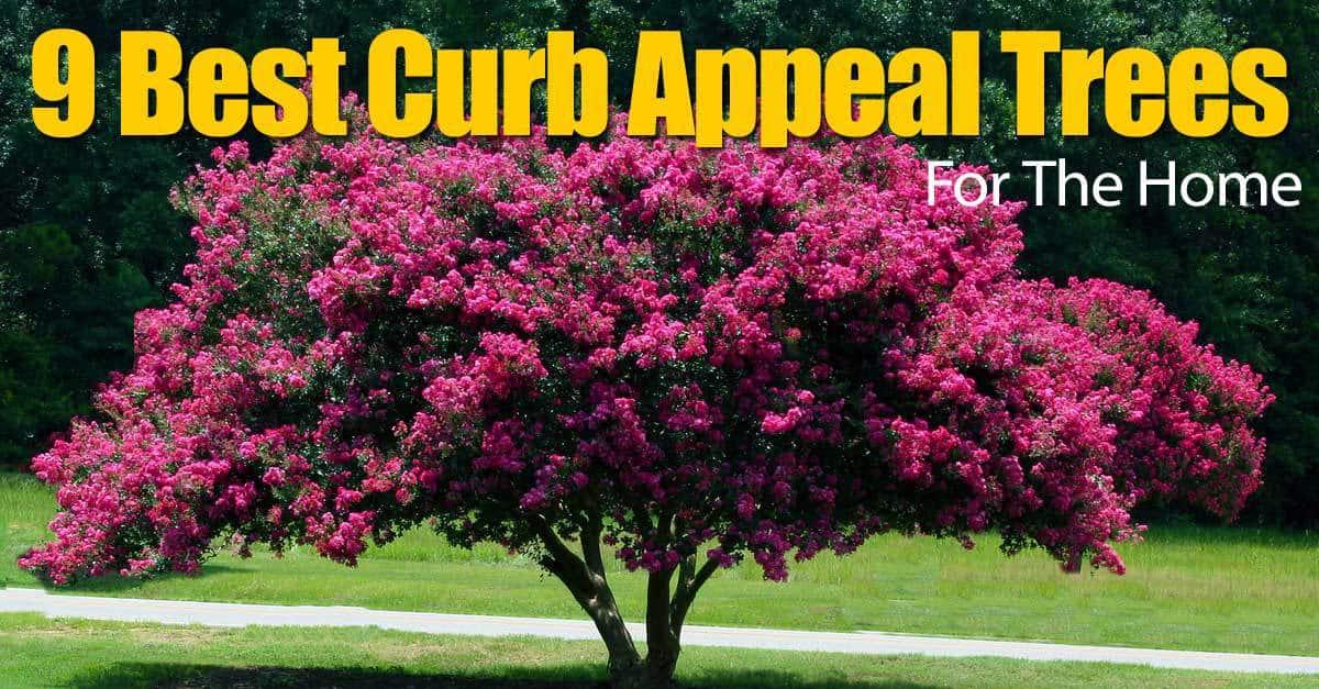 9-curb-appel-trees-093014