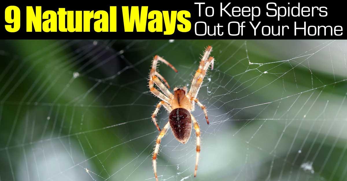 9-spider-natural-ways-093014