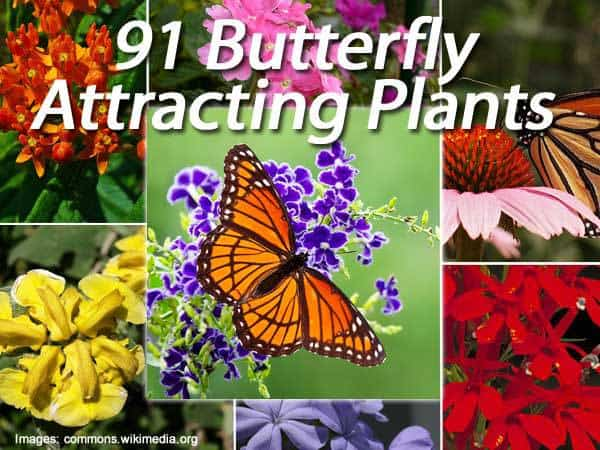 91 Butterfly Attracting Plants